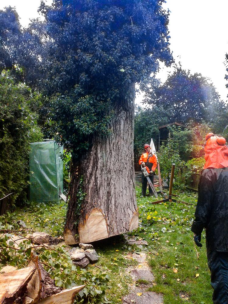 Gartenbau Andreas Quante Baumfällarbeiten