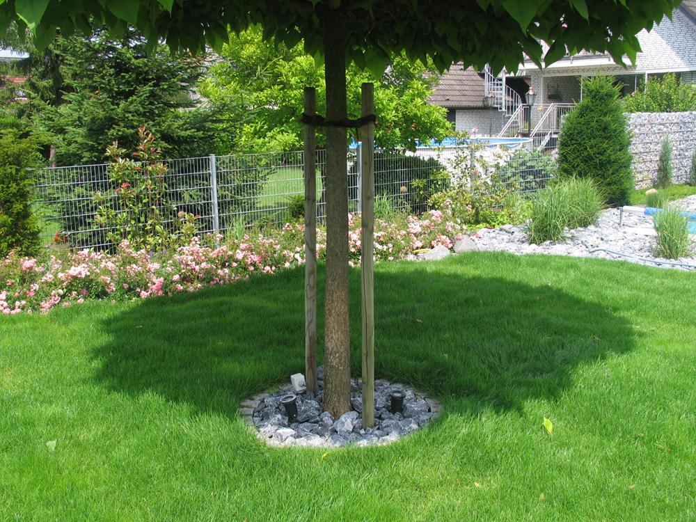 Gartenbau Andreas Quante Rasenpflege